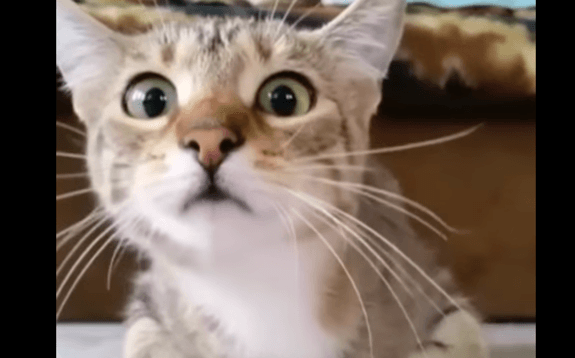 Cats Watching Horror Movies Is Apparently A Thing!